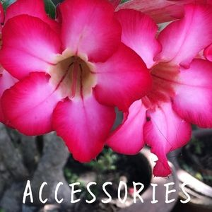 Accessories - Accessories - Bags, Scarves, jewelry and more!